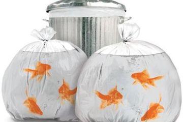 goldfishbags1.jpg