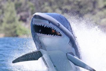 sharksubmarine1