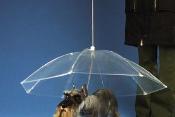 dogbrella1