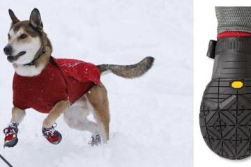 dog-snow-shoes