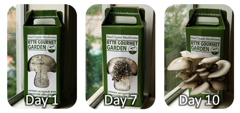 Indoor Mushroom Garden The simplest way to grow an indoor mushroom garden workwithnaturefo