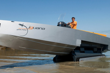 iguana29a