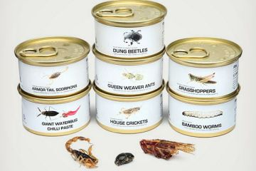 Edible-Bugs-Gift-Pack-1