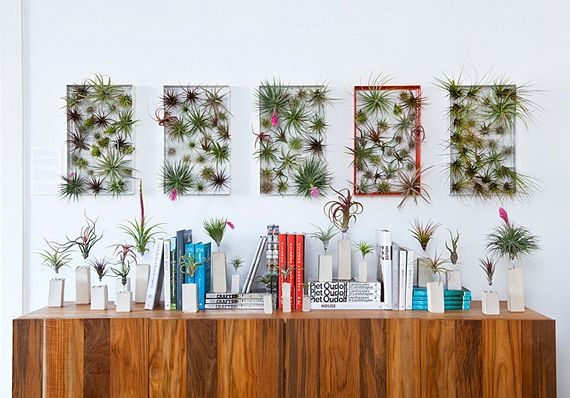 Wall Decor With Plants : Airplantframe turns air plants into decorative wall art