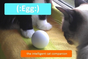 egg-cat-toy-1