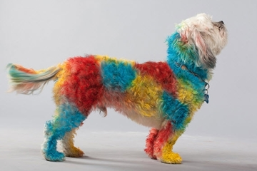 petpaint-dog-hair-spray-2