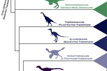 bird-dinosaur-family-tree-1