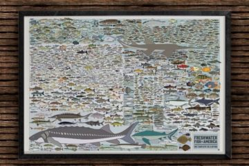 popchart-lab-freshwater-fish-america-print-1