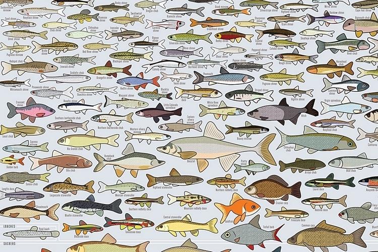 popchart-lab-freshwater-fish-america-print-3