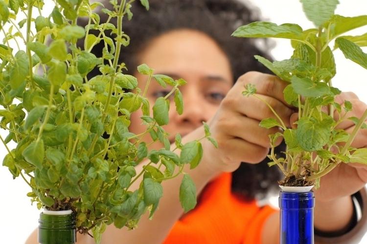 urban-leaf-worlds-smallest-garden-2
