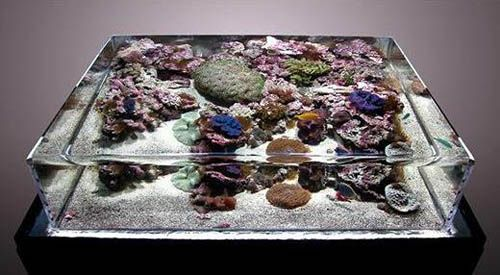 ZeroEdge Aquarium Turns Your Fish Tank Into An Infinity Pool