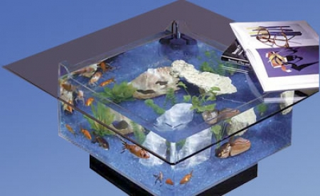 Aqua Coffee Table Aquarium Put Your Feet Up On The Fish Tank - Aqua coffee table aquarium tank