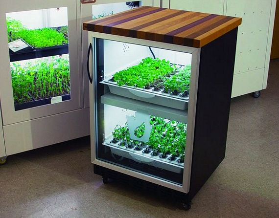 Urban Cultivator Home Is A Mini-Hydroponic System For Your Kitchen