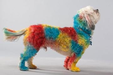 petpaint-dog-hair-spray-2