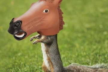 horsehead-squirrel-feeder-2