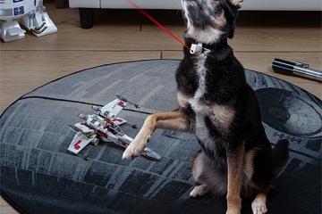 laser-collar-pet-toy-2