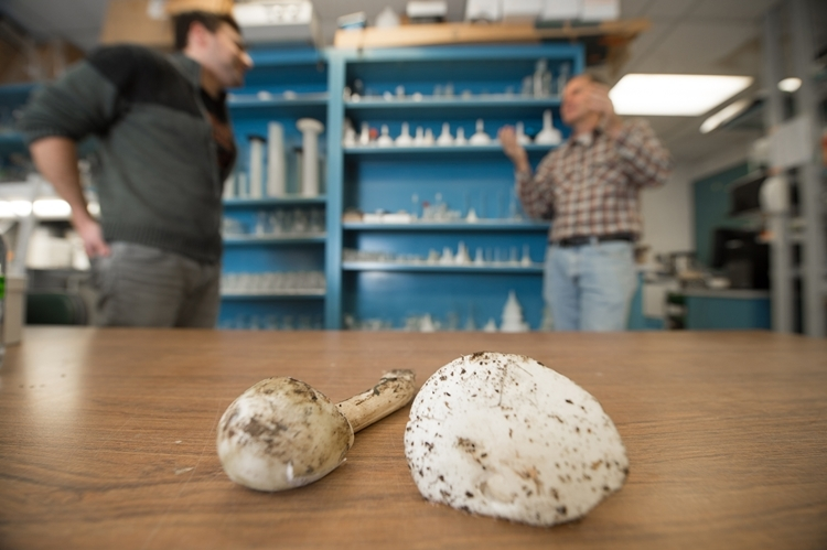 POPB-enzyme-deadly-mushrooms-1