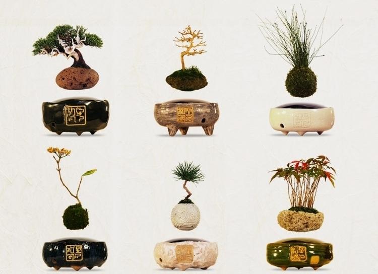 air-bonsai-0