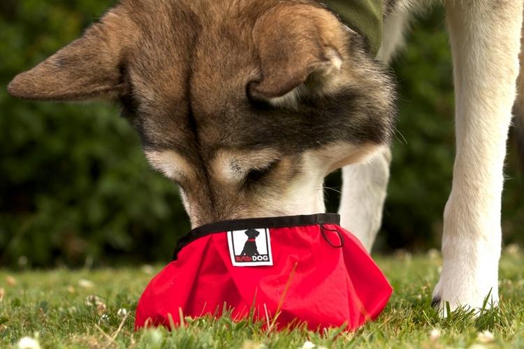 rad-dog-pocket-bowl-1