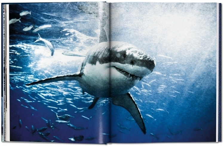 sharks-collectors-edition-2