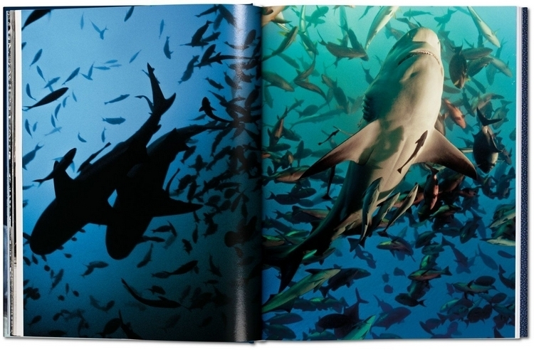 sharks-collectors-edition-4
